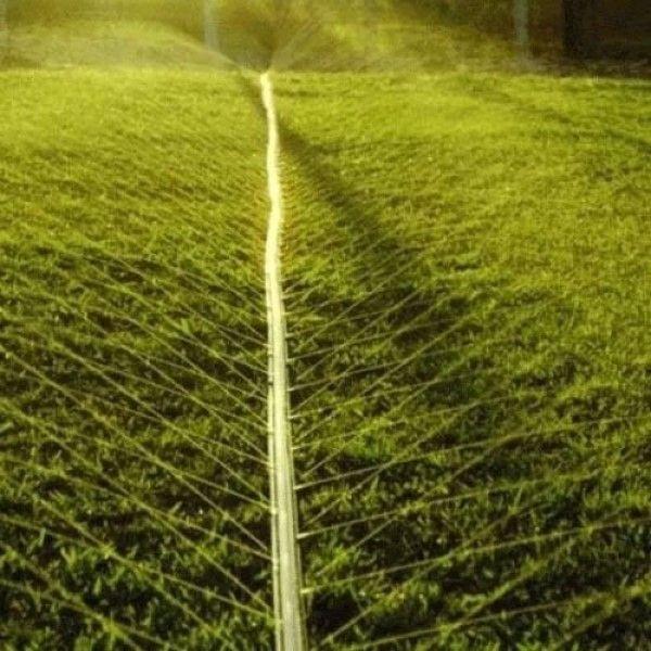1 Metro Mangueira para Irrigação 100/15 Tipo-I Santeno